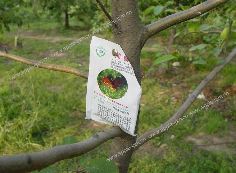 苹果园有益生物 - hao__xiaojian - hao__xiaojian的博客